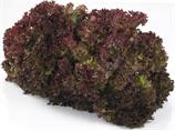 Salat lollo rosso pk import