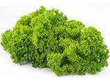 Salat lollo grønn