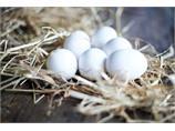 8 brett à 30 egg. Medium/large økologisk.
